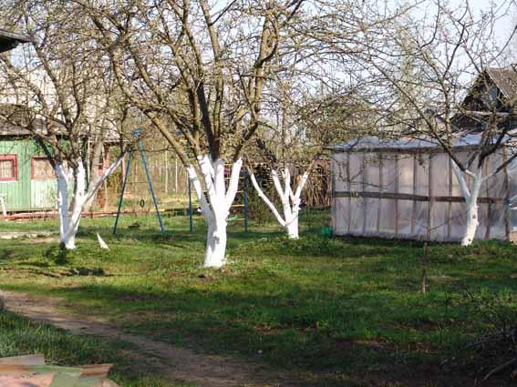 какая почва для плодовых деревьев лучше