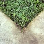 сделать газон самому