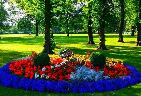 схема посадки цветов