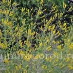 Какие травы успокаивающие и тонизирующие (ДВ, Урал, Сибирь)
