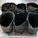 Подготовка семян к посадке на рассаду