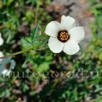 цветы-весной сибирь