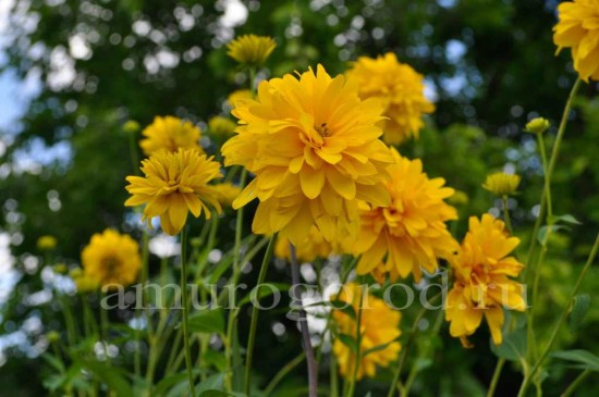 цветы Дальний Восток