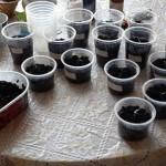 подготовка семян к посеву сибирь
