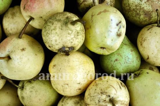 груша-сибирь