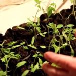 Как смешать землю для рассады или грунт для рассады