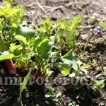 Полив овощных культур, открытый полив в Сибири, Урале и ДВ