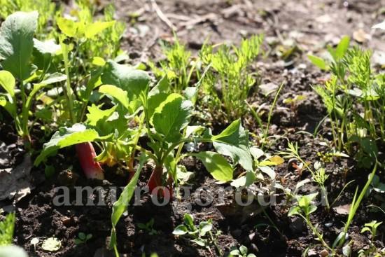 полив-овощей