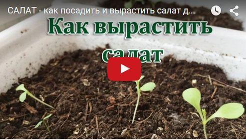 virastit salat