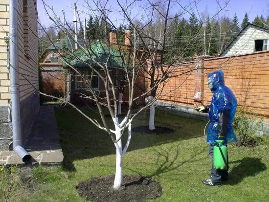 защита плодовых деревьев