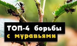 borba-s-muraviami-v ogorode