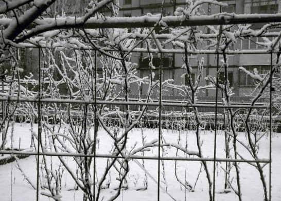 neukryvnoj-vinograd